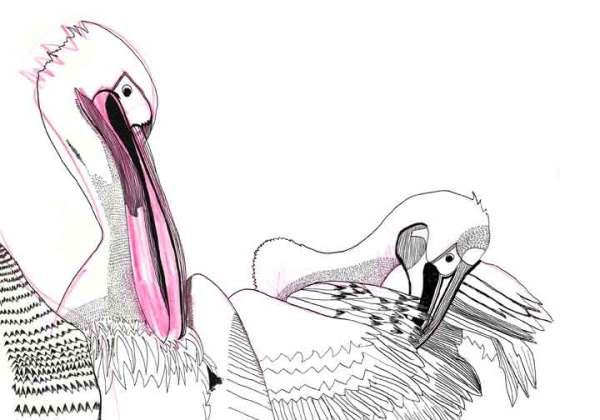 1-bird1