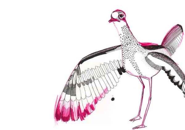 1-bird3
